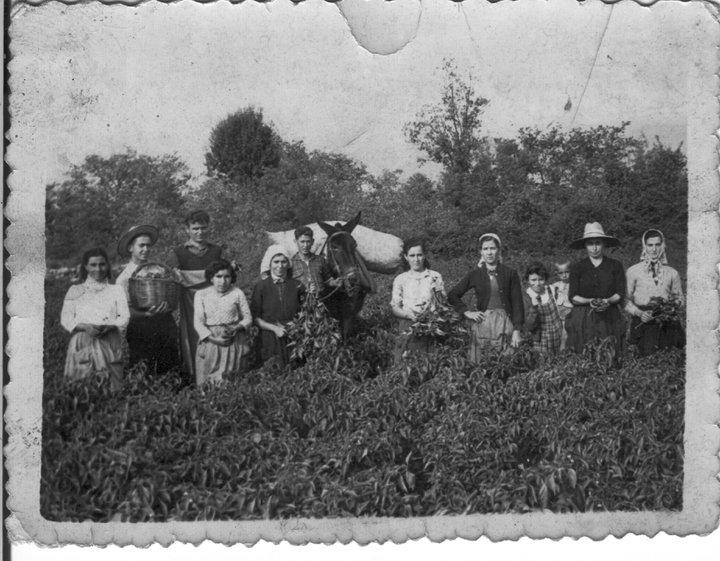 El pimentón hace 80 años
