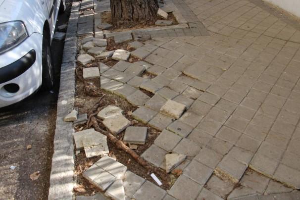 Estragos causados en el acerado por las raíces de un árbol