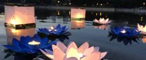 Nenúfares flotantes en la Ceremonia de la Luz. Foto: M.C,