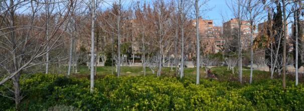 Vegetación en Madrid Río. Foto: MJ