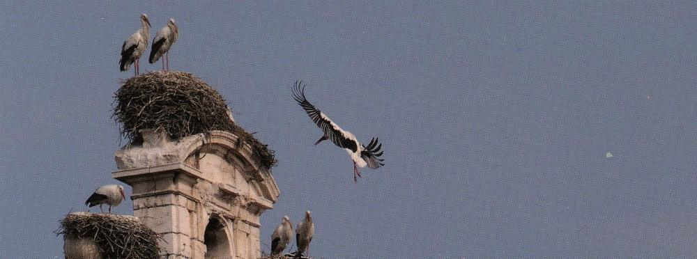 Cigüeñas blancas en Alcalá de Henares