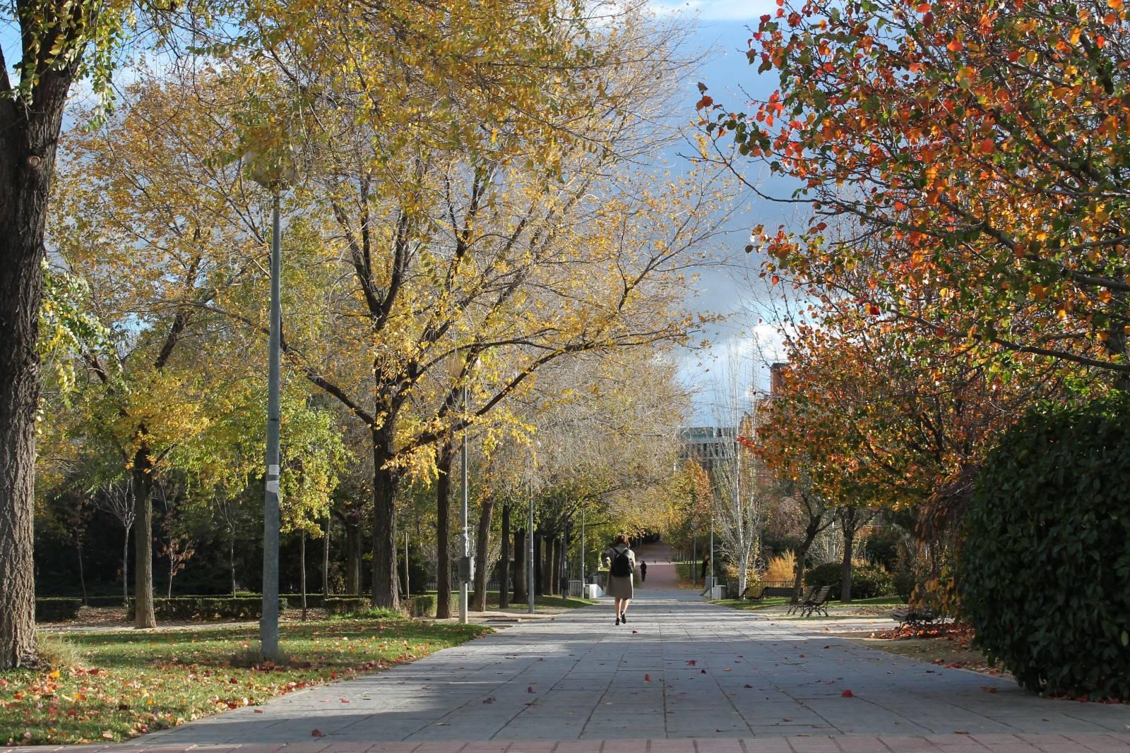 Parque arroyo de la vega madril nea for Jardin de la vega alcobendas