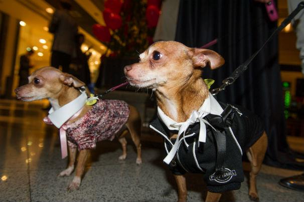 Dos mascotas en el Jardín de Serrano en la pasada fiesta de San Valentín. Foto: J.S