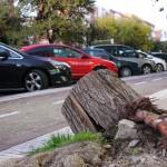 Restos de uno de los árboles caídos en Marqués de Corbera. Foto: M. Ruiz de Arcaute