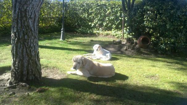 Max en su nuevo hogar junto a Paulita