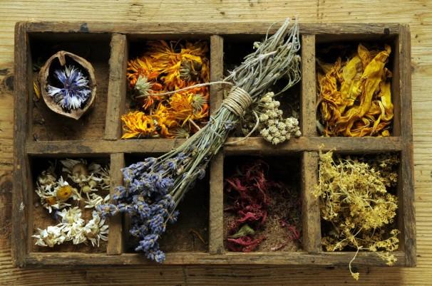 Plantas para la elaboración de productos de herbolario