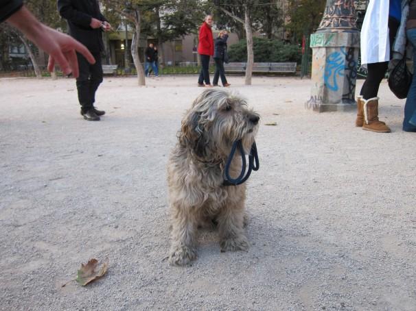 Un perro llevando su correa