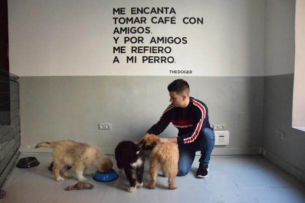 Roberto Aláez junto a tres cachorros en adopción. Foto: M. Lozano